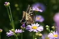 花と蝶の写真